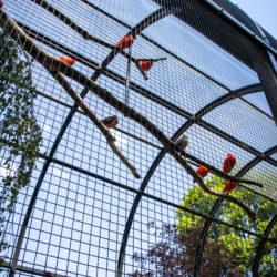 Volière gaas - aviary mesh